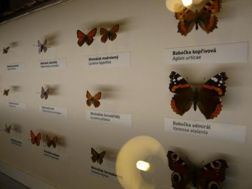 Noc v muzeu motýli