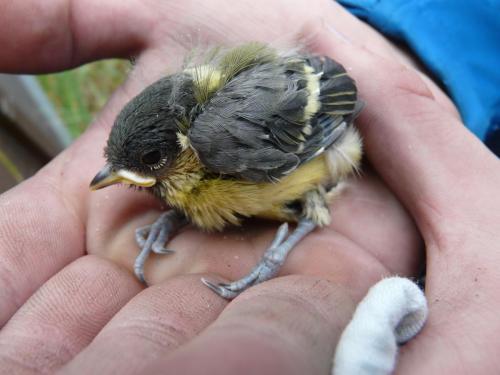 bird-nestboxes P1300961