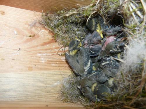 bird-nestboxes P1300963