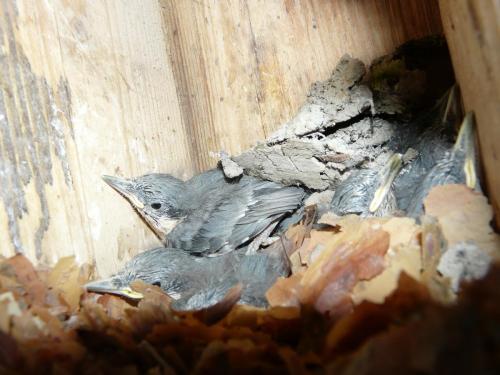 bird-nestboxes P1300966