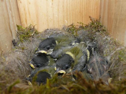 bird-nestboxes P1310103