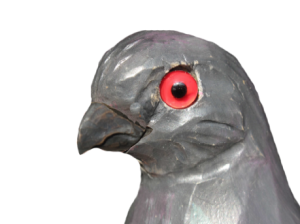 11 rozpoznavani predatora holuba s krahujcim zobakem
