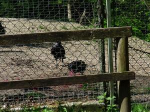 ravens 04
